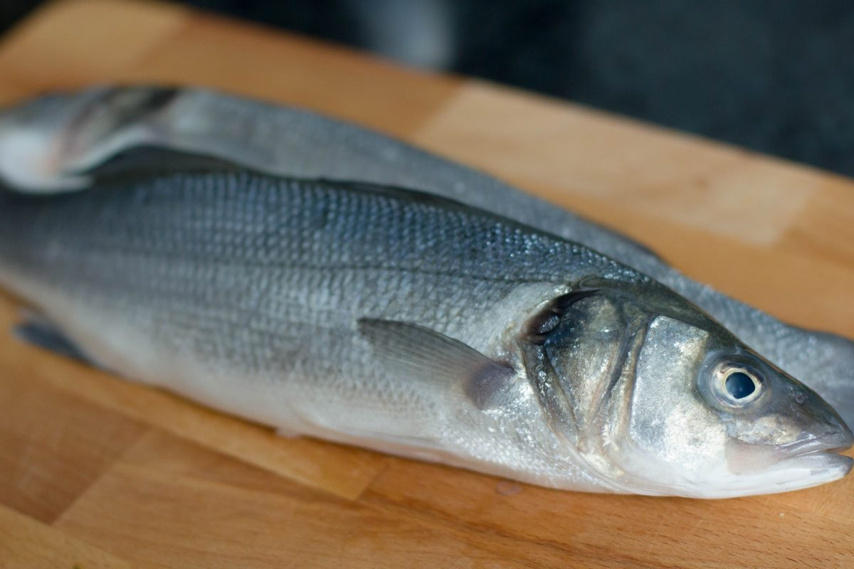 sea bass/ levrek/ lup de mare/ biban de mare