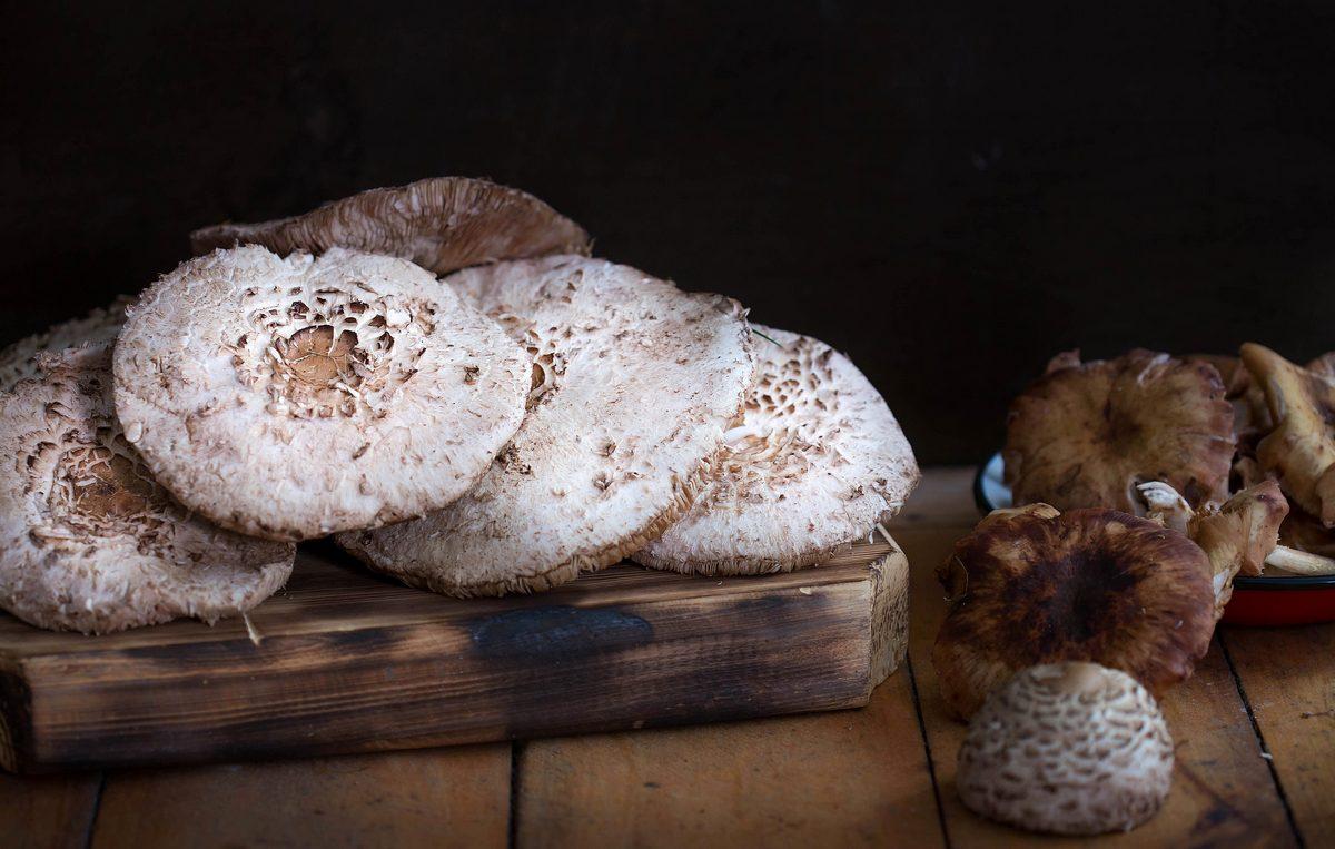 pălăria șarpelui, ciupercile comestibile pe care nu prea le vrea nimeni